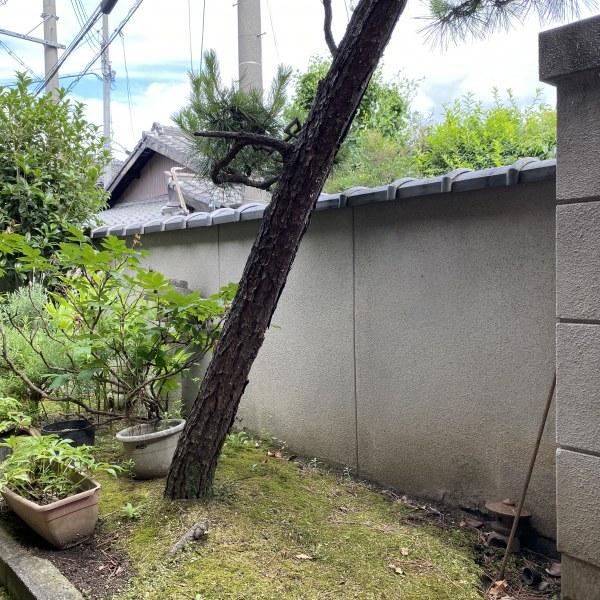 塀に囲われた庭